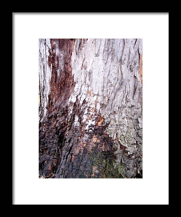 Nature Abstract Modern Green Tree Bark Stripes Pattern Framed Print featuring the photograph Abstract Art 10 by Anna Villarreal Garbis