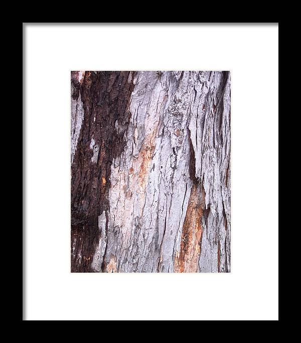 Nature Abstract Modern Green Tree Bark Stripes Pattern Framed Print featuring the photograph Abstract Bark 8 by Anna Villarreal Garbis