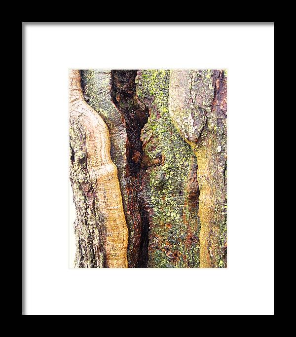 Nature Abstract Modern Green Tree Bark Stripes Pattern Framed Print featuring the photograph Abstract Bark by Anna Villarreal Garbis