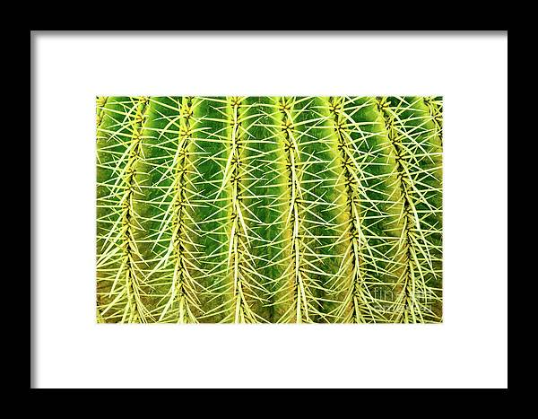 Cactus Framed Print featuring the photograph Abstract Cactus by Delphimages Photo Creations