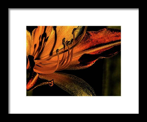 Abstract Flower With Gold And Red Framed Print featuring the photograph Abstract Flower Golden Red by Mar Nie