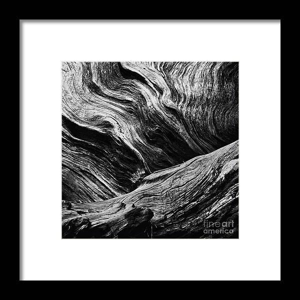 Abstract Tree Lll Black And White Framed Print By Hideaki Sakurai