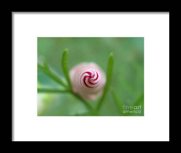 Flower Framed Print featuring the photograph Accelerating Acceptance Photography by Tina Marie
