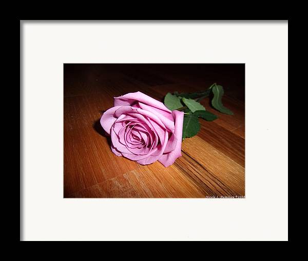 Rose Framed Print featuring the photograph Accolade by Nicole I Hamilton