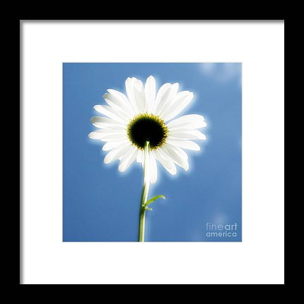 Daisy Framed Print featuring the photograph Achievement by Idaho Scenic Images Linda Lantzy