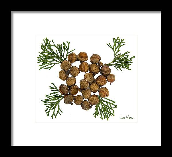 Acorns Framed Print featuring the digital art Acorns With Cedar by Lise Winne