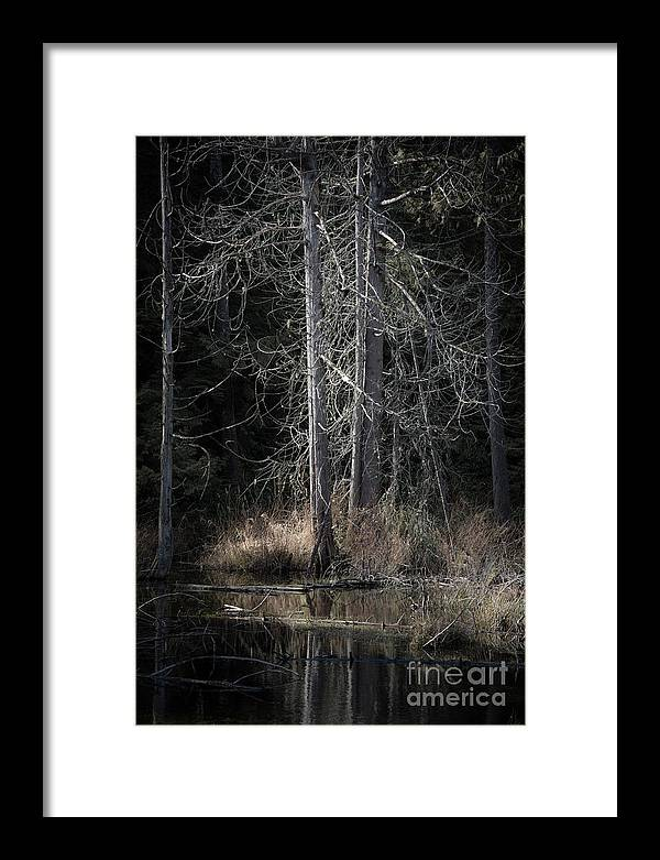 Nature Framed Print featuring the photograph Across The Pond by David Hillier