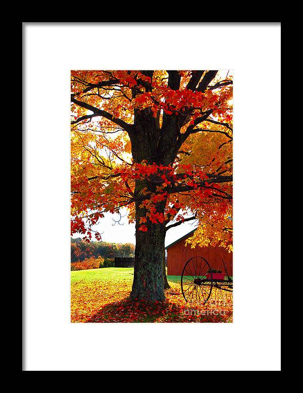 Berry Framed Print featuring the photograph Adirondack Color Show by Diane E Berry