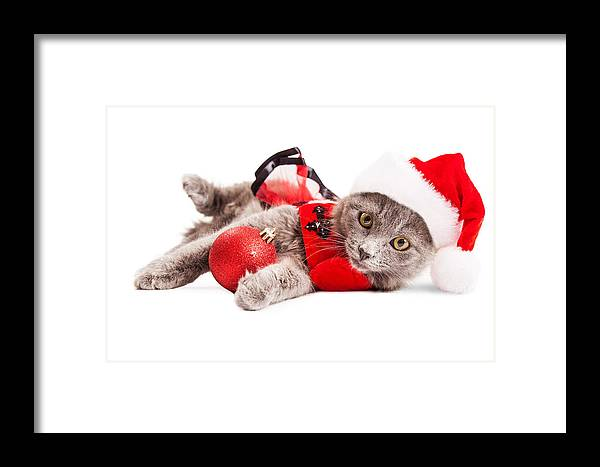 Adorable Framed Print featuring the photograph Adorable Christmas Kitten Over White by Susan Schmitz
