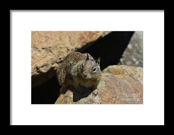 Squirrel Framed Print featuring the photograph Adorable Up Close Look Into The Face Of A Squirrel by DejaVu Designs