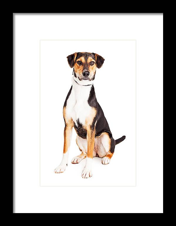 Alone Framed Print featuring the photograph Adorable Young Mixed Breed Puppy Dog by Susan Schmitz