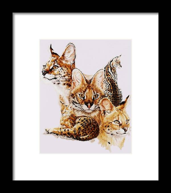 Serval Framed Print featuring the drawing Adroit by Barbara Keith