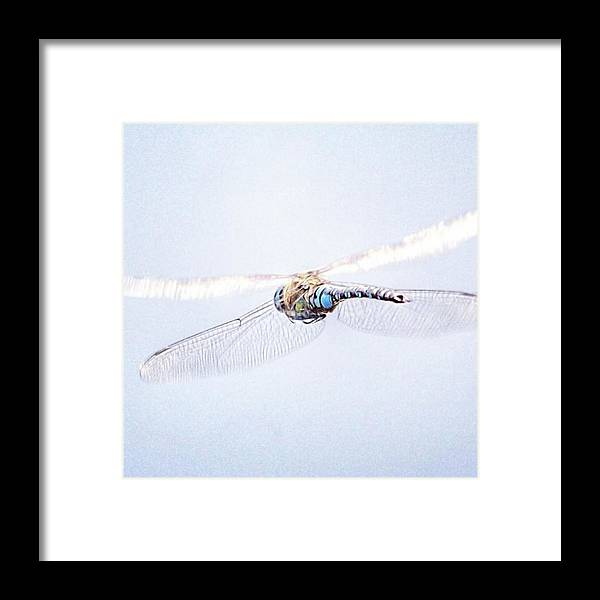 Dragonfly Framed Print featuring the photograph Aeshna Juncea - Common Hawker In by John Edwards