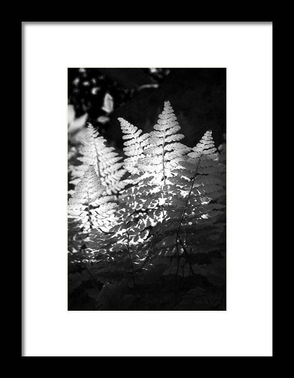 Fern Framed Print featuring the photograph After Glow by Randy Oberg