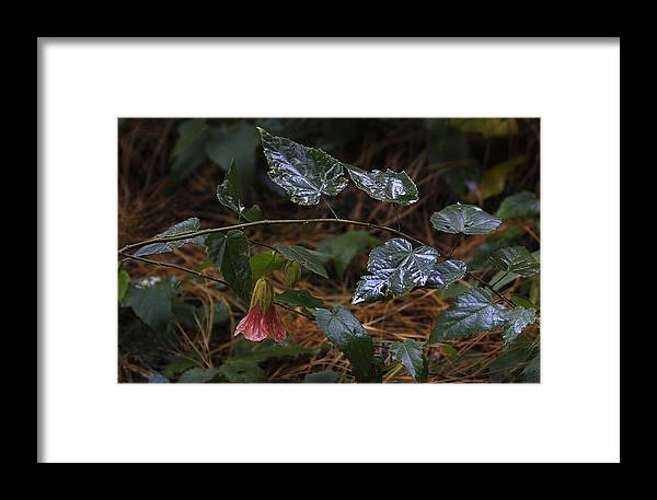 After Rain Framed Print featuring the photograph After Rain. Souvenir De Bonn. by Viktor Savchenko