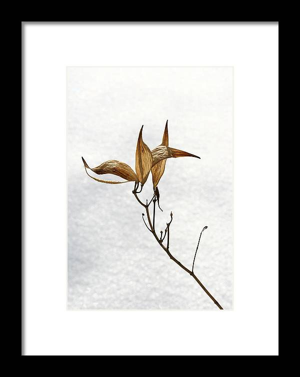 Flower Framed Print featuring the photograph After Setting Seed by Steve Augustin