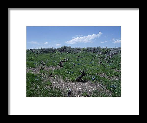 Nature Framed Print featuring the photograph After The Fire by Susan Pedrini
