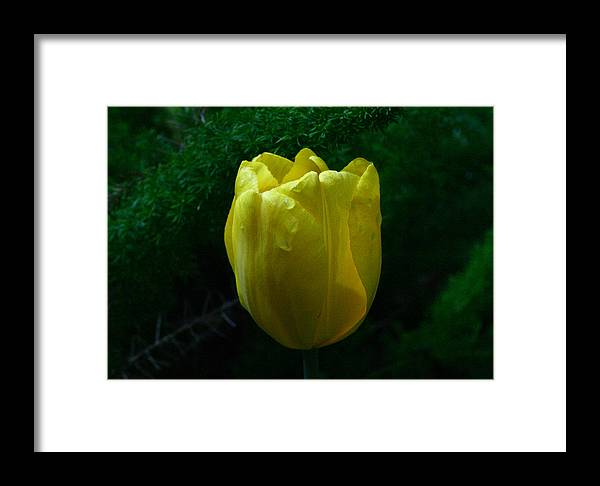 Flower Framed Print featuring the photograph After The Rain by David Houston