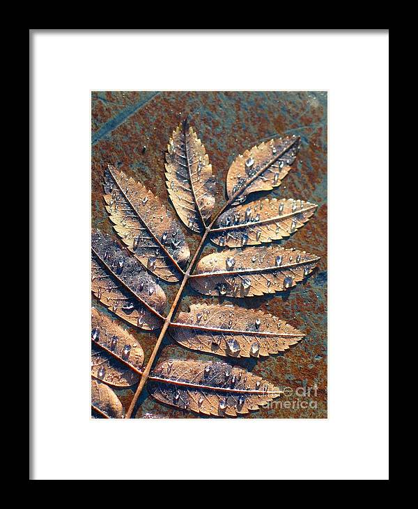 Rain Framed Print featuring the photograph After The Rain by Idaho Scenic Images Linda Lantzy