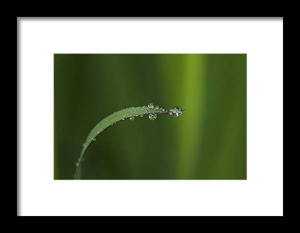 Rain Framed Print featuring the photograph After The Rain by Morgan Wright