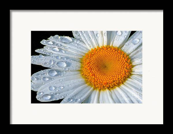 Flowers Framed Print featuring the photograph After The Rain by Neil Doren