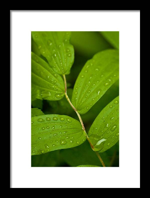 Closeup Framed Print featuring the photograph After The Rainfall by R J Ruppenthal