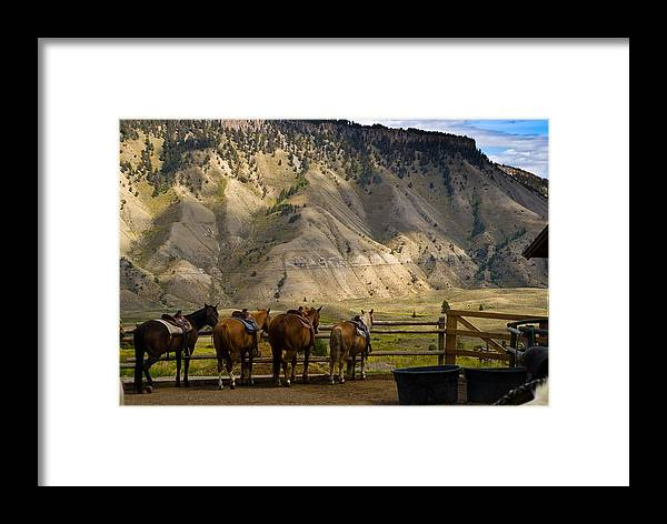 Horse Framed Print featuring the photograph After The Ride by Patrick Flynn