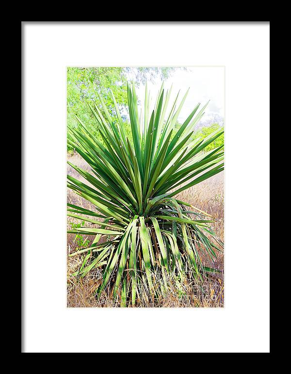 Afternoon Framed Print featuring the photograph Afternoon Yucca by Gary Richards