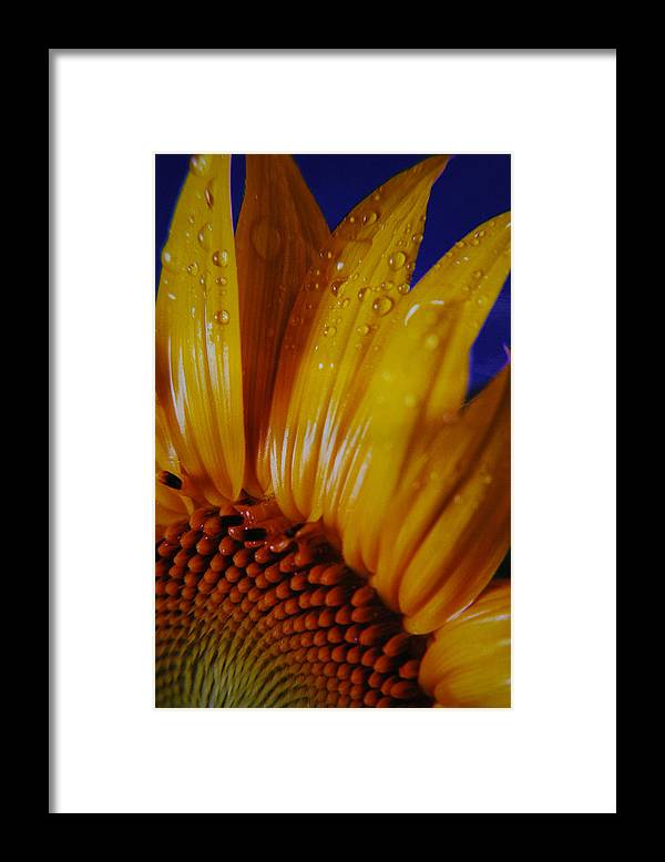 Floral Framed Print featuring the photograph Against The Blue by Lori Mellen-Pagliaro