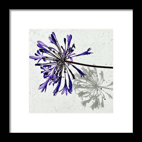 Flower Framed Print featuring the photograph Agapanthus by Julie Gebhardt