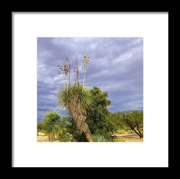 Tucson Framed Print featuring the photograph Agave Cactus And A Purple Sky by Teresa Stallings