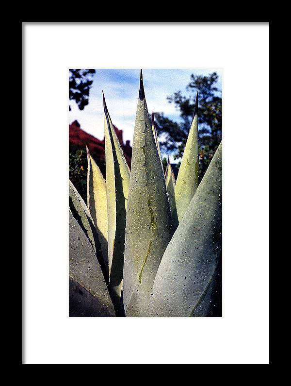 Agave Framed Print featuring the photograph Agave by Heather S Huston