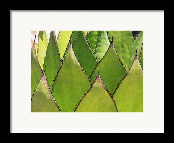 Cactus Framed Print featuring the photograph Agave by Robert Gladwin