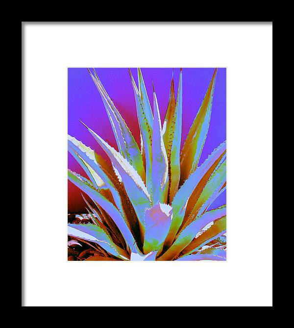 Cactus Framed Print featuring the photograph Agave Spirit by M Diane Bonaparte