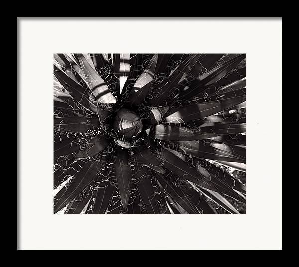 Agave Framed Print featuring the photograph Agave by Steve Bisgrove