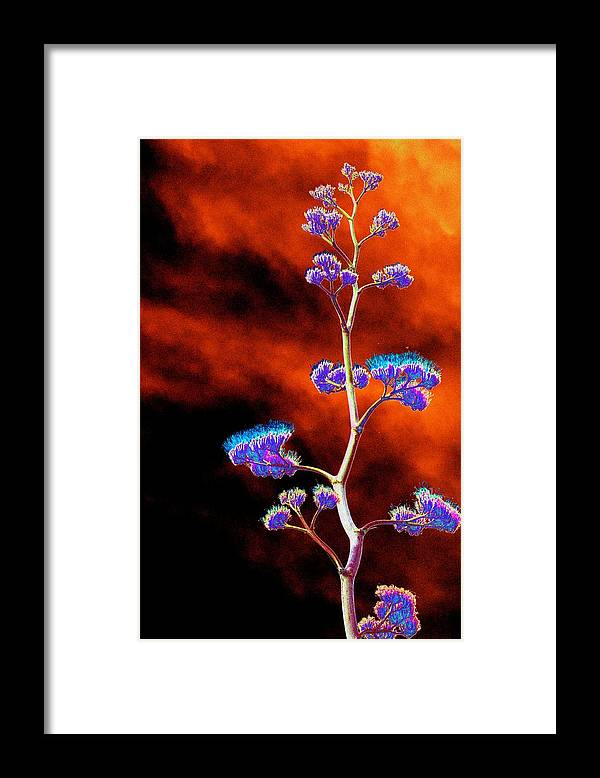 Agave Framed Print featuring the photograph Agave Through Tequila Eyes by Richard Henne