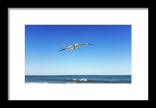 Framed Print featuring the photograph Air Play by Belinda Jane