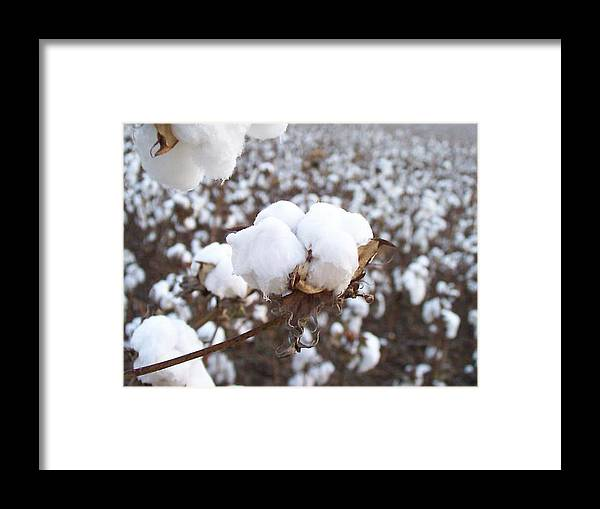 Alabama Framed Print featuring the photograph Alabama Cotton Bowl by Paula Ferguson