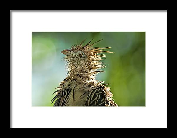 Fauna Animals Birds Feathers Framed Print featuring the photograph Alert Bird by LOsorio Photography