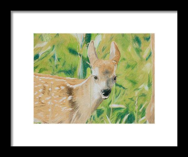 Fawn Framed Print featuring the painting Alert Fawn by Miriam A Kilmer