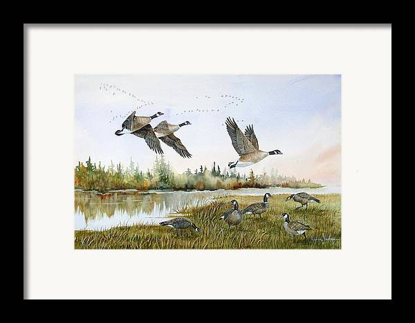Aleutian Geese Framed Print featuring the painting Aleutian Geese At Lake Earl by Lynne Parker