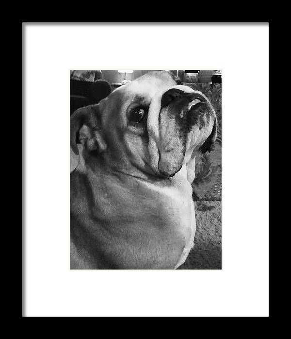 Alfred Hitchcock Bullie Pose Framed Print featuring the photograph Alfred Hitchcock Bullie Pose by Kym Backland