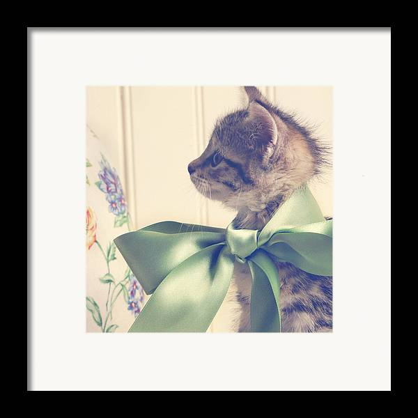 Kitten Framed Print featuring the photograph All Dressed Up by Amy Tyler