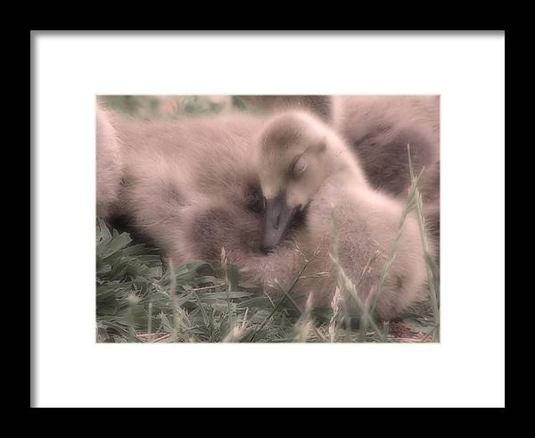 Goose Framed Print featuring the photograph All Is Right In My World by Kenneth Krolikowski