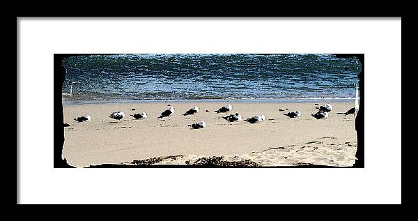 Bird Framed Print featuring the photograph All My Gulls In A Row by Ellen Lerner ODonnell
