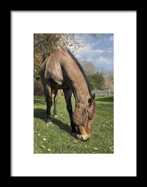 Horse Framed Print featuring the photograph All Neck by Jack Goldberg