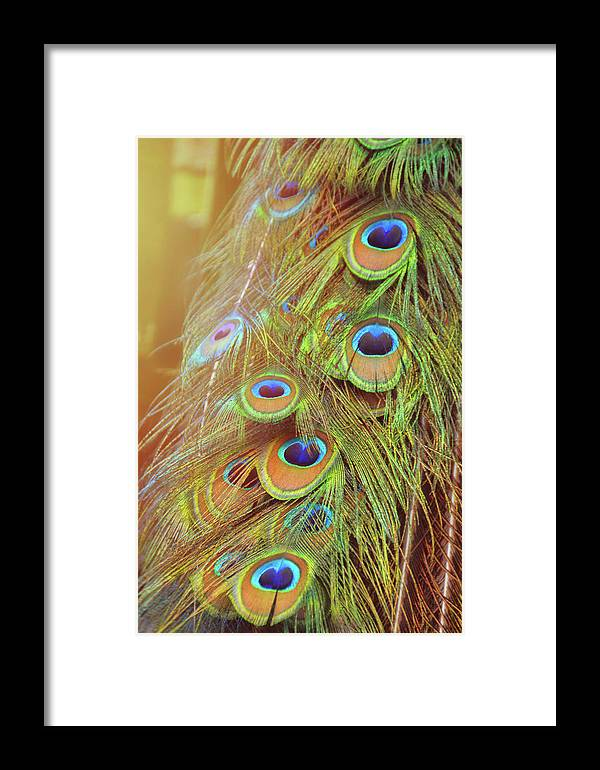 Art Framed Print featuring the photograph All-seeing by Jamart Photography