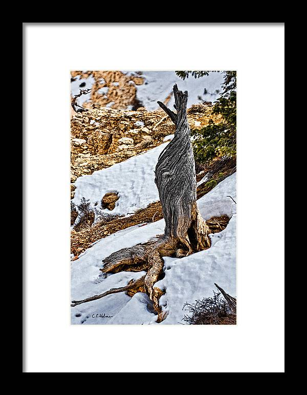 Tree Framed Print featuring the photograph All That Remains by Christopher Holmes