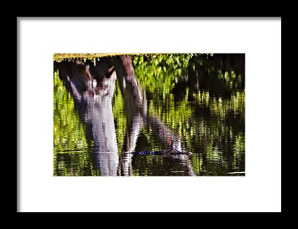 Landscape Framed Print featuring the photograph Alligator by Michael Whitaker