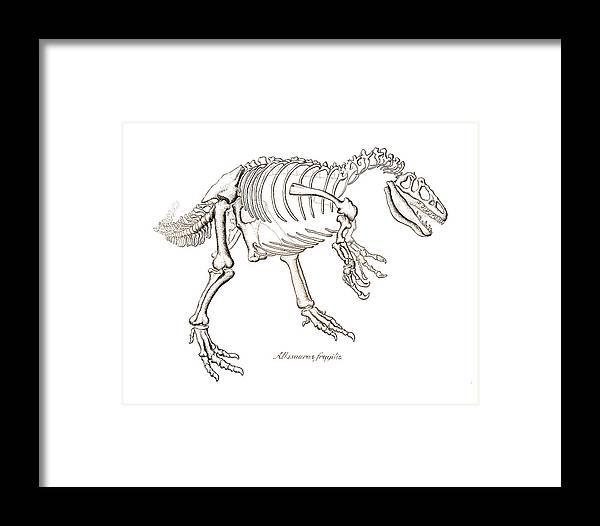 Allosaurus Framed Print featuring the drawing Allosaurus Skeleton by Karla Beatty